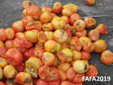 tomates_800x600